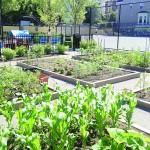 A CFH urban garden.