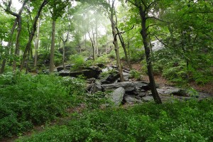 Explore the trails at Inwood Hill Park.