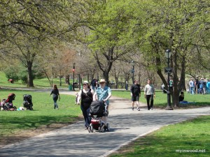 Strolling-in-Inwood-Hill-Parkweb