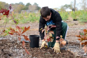 The Stewardship Day looks restore and preserve the natural areas of Inwood Hill Park.