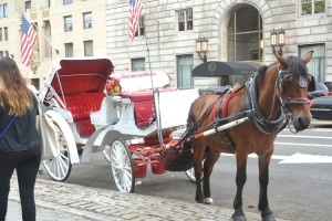 There are an estimated 200 carriage horses in the city.