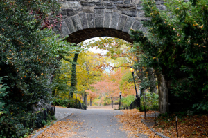 Discover the greenery at Fort Tryon Park.