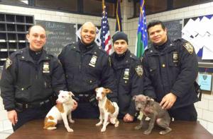 La agencia ha tomado el rol principal de responder a todas las quejas de crueldad contra los animales.