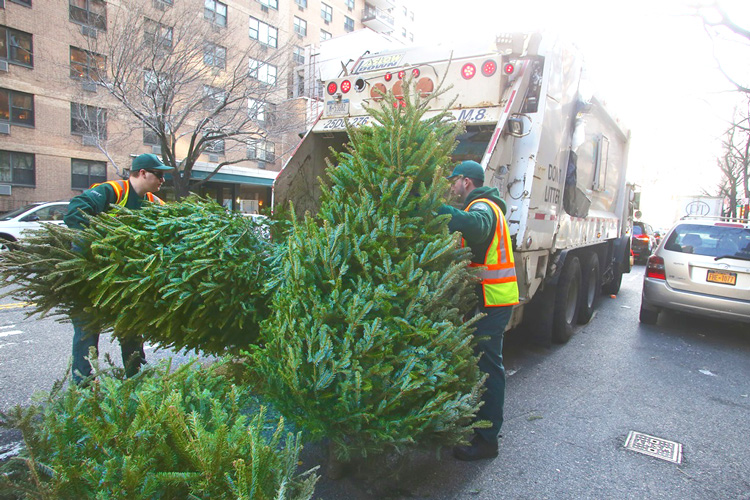 In 2014, more than 213,000 Christmas trees were collected.