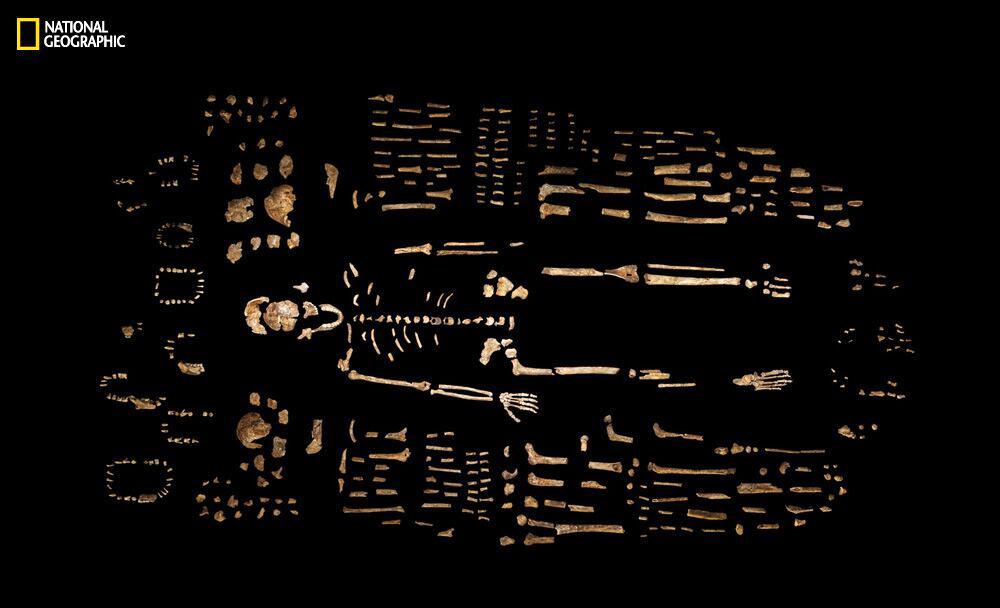 More than 1,500 pieces of bone were retrieved.