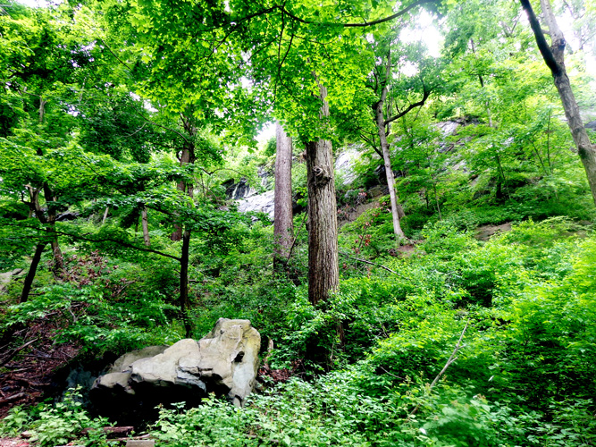 Discover the park's expansive forest trails.‎
