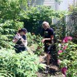Volunteers at work in the backyard garden.