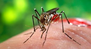 There have been 346 city cases of the mosquito-borne virus.
