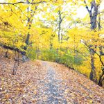 A view of a trail at Inwood Hill Park in Manhattan.