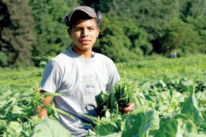 It is estimated that 120,000 farmworkers in New York State would be affected.