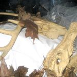 The casket is filled with sand, animal bones, flora and fauna.