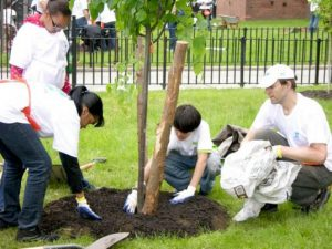 The city has allocated $82 million to fund street tree plantings.