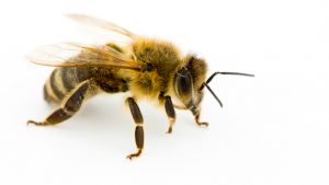 Honey bees are responsible for one out of every three bites of food.