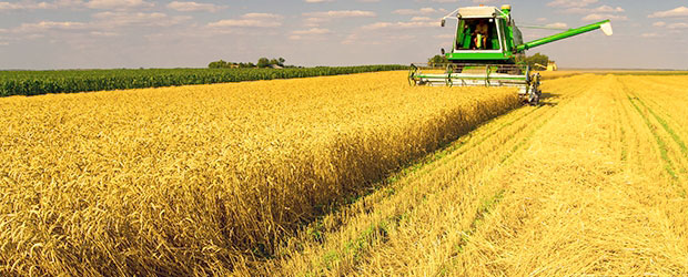 Wheat crops are likely to be affected.