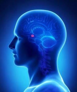 The amygdala sets off a cascade of signals.