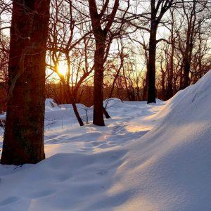 Walk the woods.