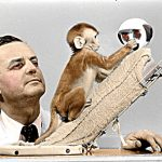 Psychologist Harry Harlow observes a baby monkey interact with a cloth mother.