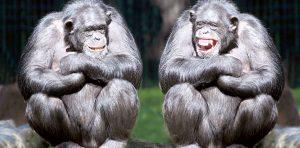 Positive primates.
