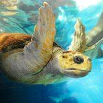 Se estima que cada año 100,000 criaturas marinas mueren por enredo de plástico.