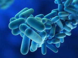 The legionella bacteria causes flu-like symptoms in adults.