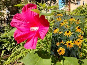 """""""El RING Garden no podrá tener el tipo de flores vistosas que tenemos ahora"""", escribe la autora y fundadora del jardín."""