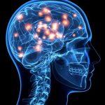 Una línea de investigación sugiere diferencias cerebrales estructurales en mentirosos frecuentes.