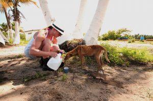 """""""Vamos a llevarlo un perro a la vez"""", dijo Chrissy Beckles."""