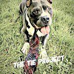 El perro Butley es una mascota.